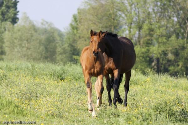 minimoun26-04-2011-0026