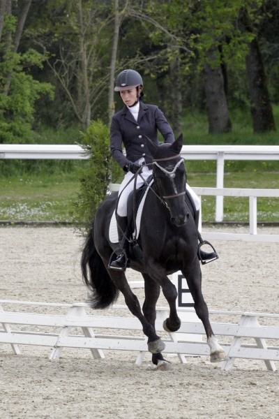 Le lion dressage avril 2013