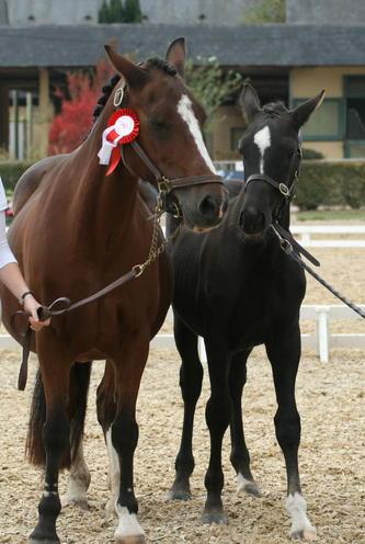 Un amour à 5 mois : 2ème national dressage foal