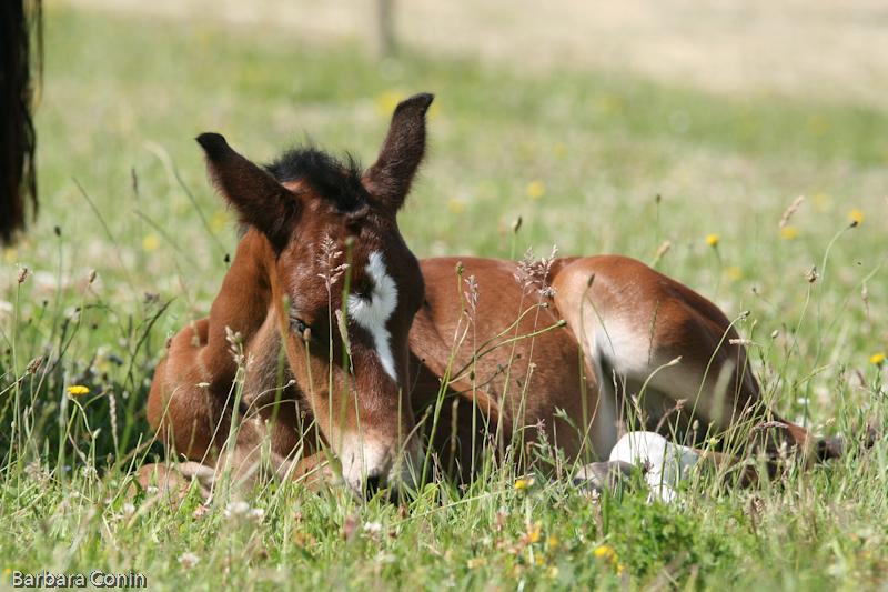 Virevolte foal